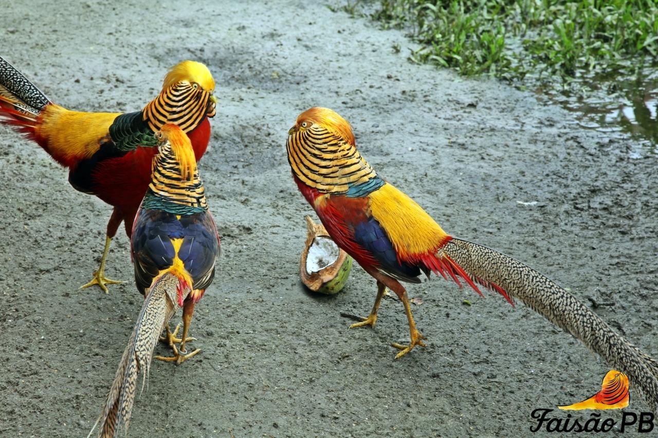 Top 10 Pássaros Mais Bonitos do Mundo