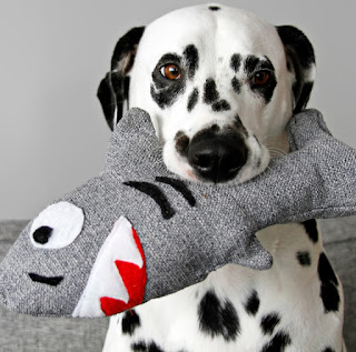 Dalmatian dog with homemade squeaky stuffed shark toy