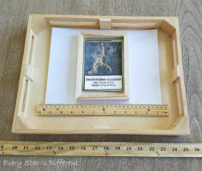 Arachnids Measurement Cards Activity