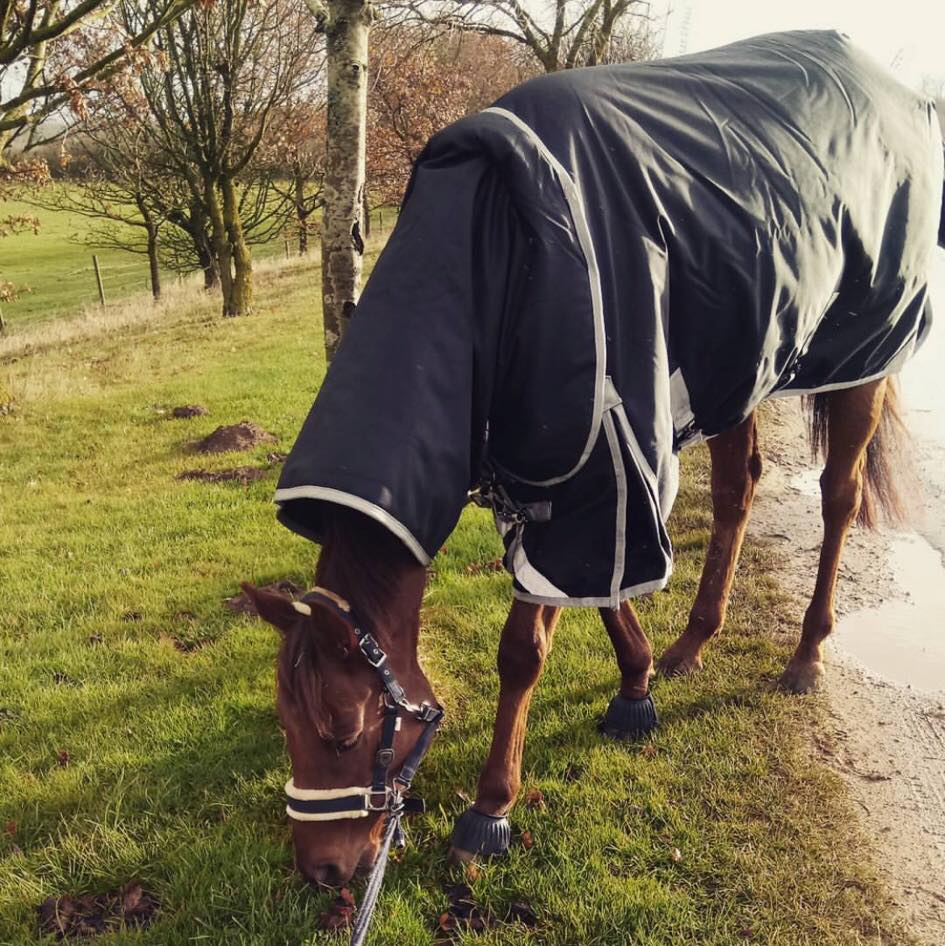 Gee Me Derby House Elite Turnout Rug Ticks Every Box