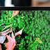 Volgende vouwbare Samsung-smartphone heeft camera achter scherm