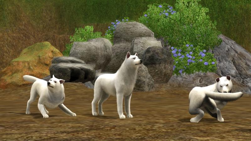 Zoth-Hunde1.jpg