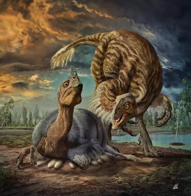 B. sinensis visse circa 90 milioni di anni fa, durante il periodo Cretaceo.
