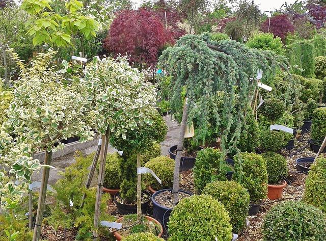 food plant nursery business ideas