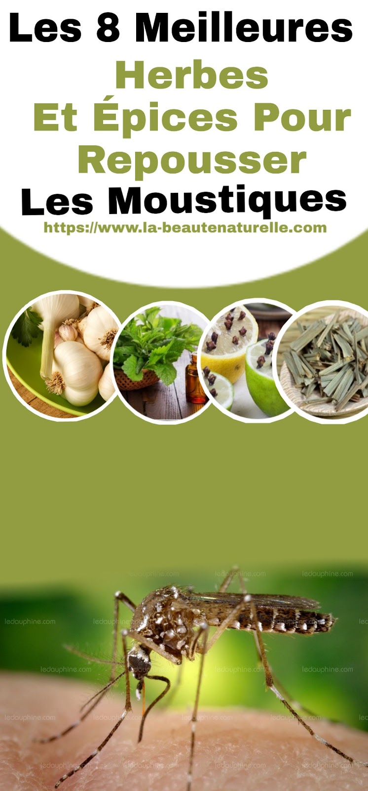Les 8 Meilleures Herbes Et Épices Pour Repousser Les Moustiques