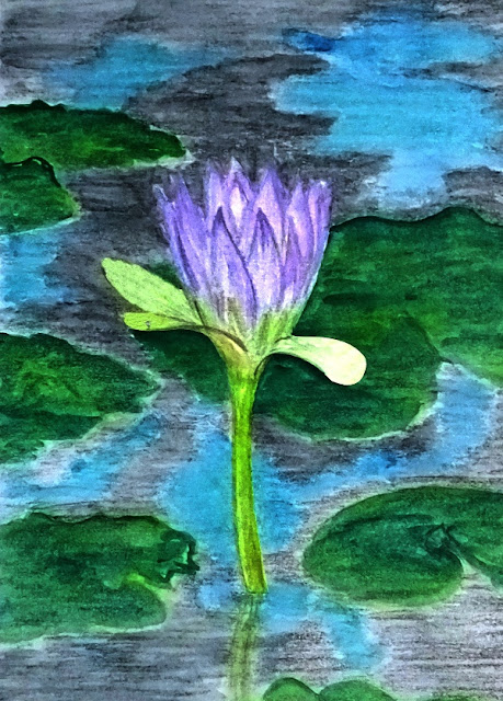 Bunga teratai dari Merauke