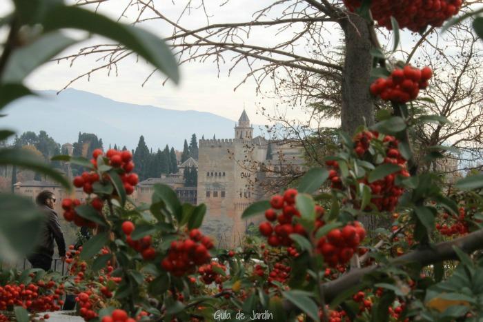 La Alhambra desde el Albaicín