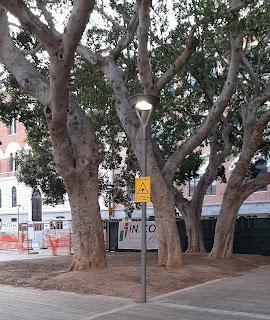 Ficus di piazza Garibaldi, di nuovo?