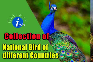 Collection of National Bird of different Nations