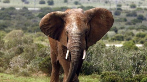 Government leaders urge Vietnamese to Say No to Ivory