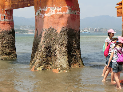 redmomiji.com/miyajima-barnacles