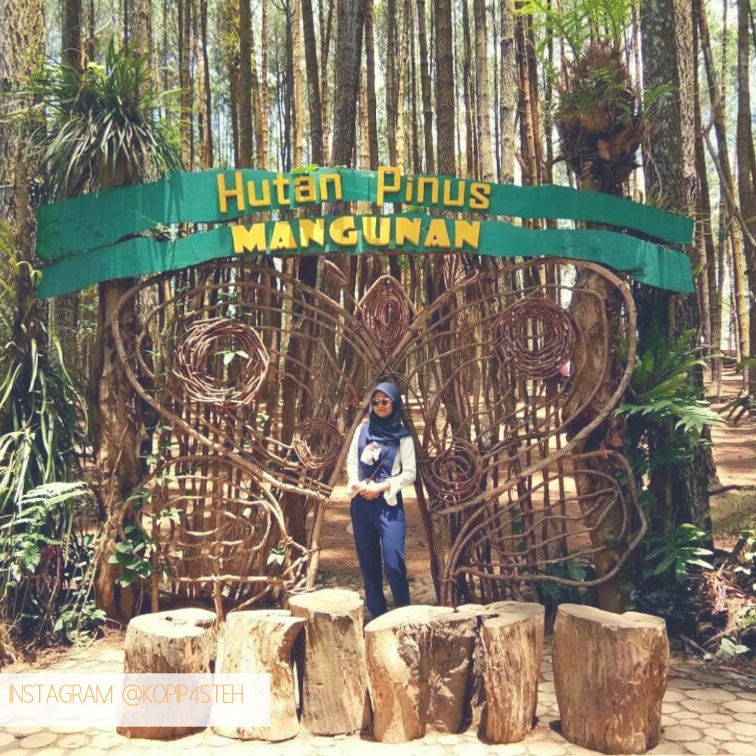 Wisata Jogja Hutan Pinus Mangunan