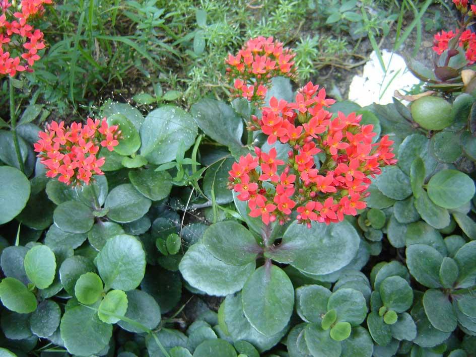 พืชที่ช่วยเพิ่มความชื้นในอากาศ