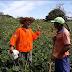 Com humor, produtor rural mostra vida de agricultores em canal no Youtube