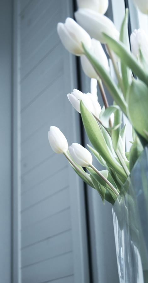 Blog + Fotografie by it's me fim.works - weißeTulpen mit lilafarbenen Spitzen, Fensterladen