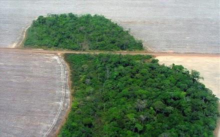 Αμαζόνιος: Έχασε 9.762 τετραγωνικά χλμ βλάστησης σε ένα χρόνο