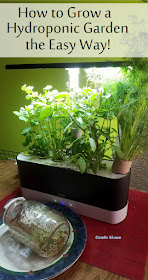 how to set up and troubleshoot an AeroGarden indoor hydroponic herb garden