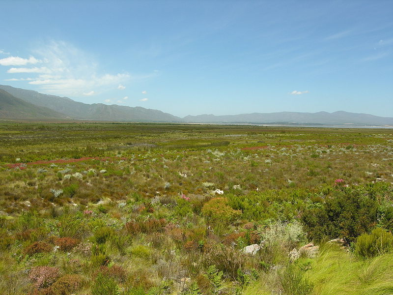 Grassland Biome Images - Reverse Search