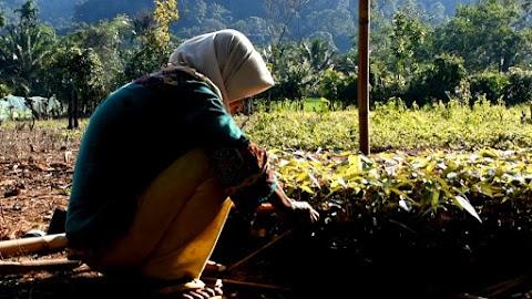 Seminar dan Lokakarya yang melibatkan peran Perempuan dalam Adaptasi Perubahan Iklim