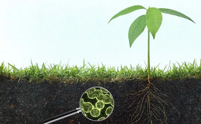 Microbes present in soil
