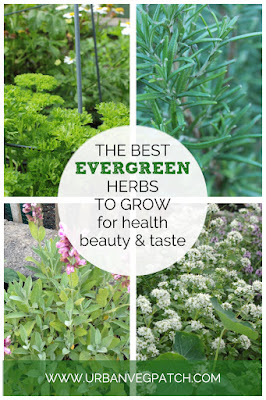 The best evergreen herbs to grow for health beauty and taste