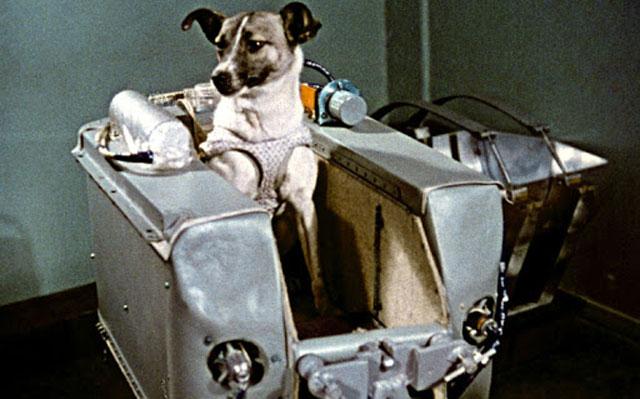 Anjing Laika ke luar angkasa