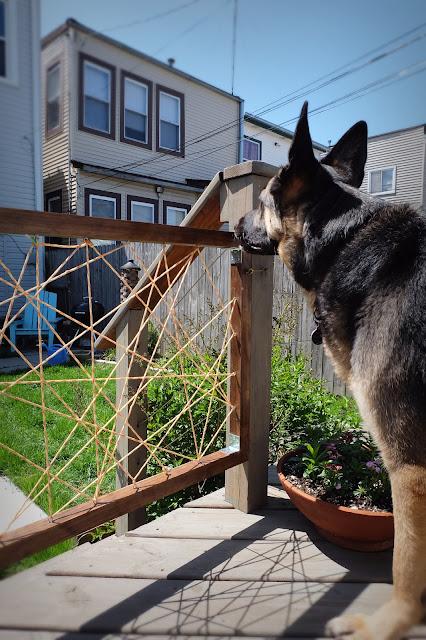 dog gate deck removable