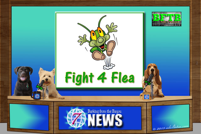 Dog news desk with three dogs and a Fight 4 Flea screen