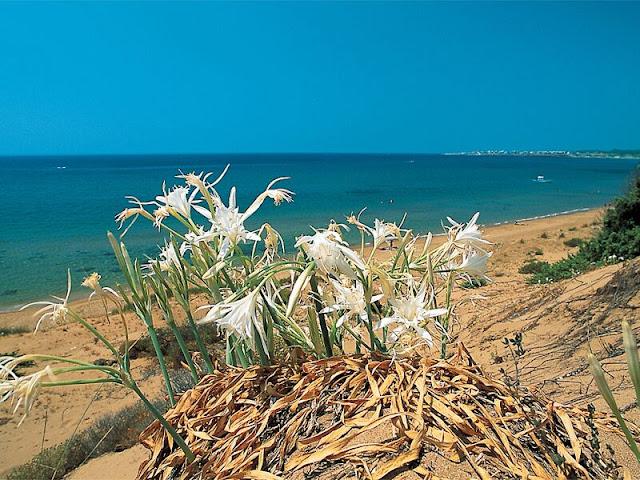 dune-di-sovereto