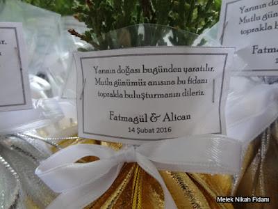 Eskişehir nikah çamı fidanı Fatmagül Alican 2