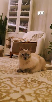 Ortaçağ Leydisi ,badem,kedili ev
