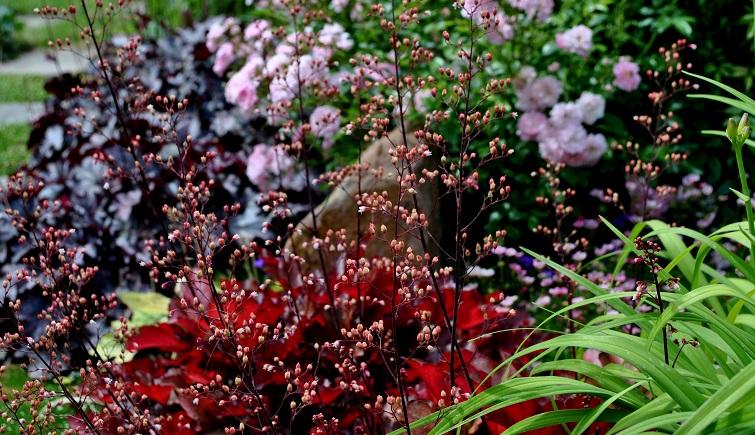 Pflanzen für die Floristik