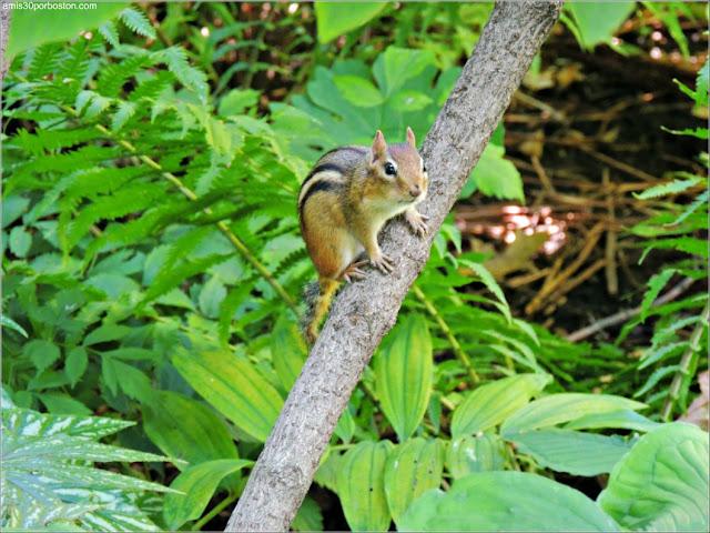 Principales Atracciones Turísticas en Montreal: Jardín Botánico
