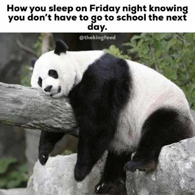 Funny Panda on tree.