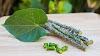 Health Benefits Of Giloy In Marathi - गुळवेल खाण्याचे फायदे