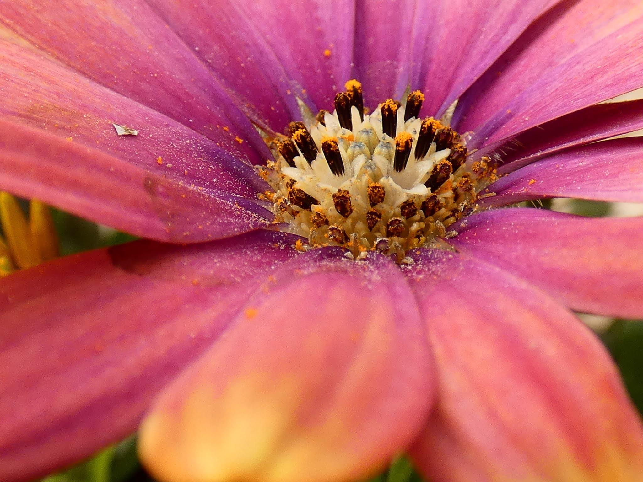 Sincerely Loree: Flowers in my garden