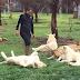 tigre salva a cuidador de animales de morir en garras de un leopardo
