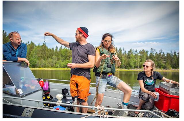 Neljä ihmistä ihmettelevät vesikasveja veneessä kesäisenä päivänä.