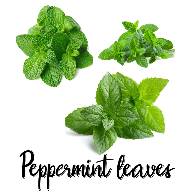 Where to buy Peppermint leaves