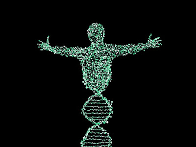 Genetic study shows evidence for creation and not human evolution