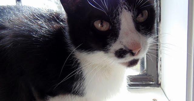 Our cat Dottie adopted from animal shelter