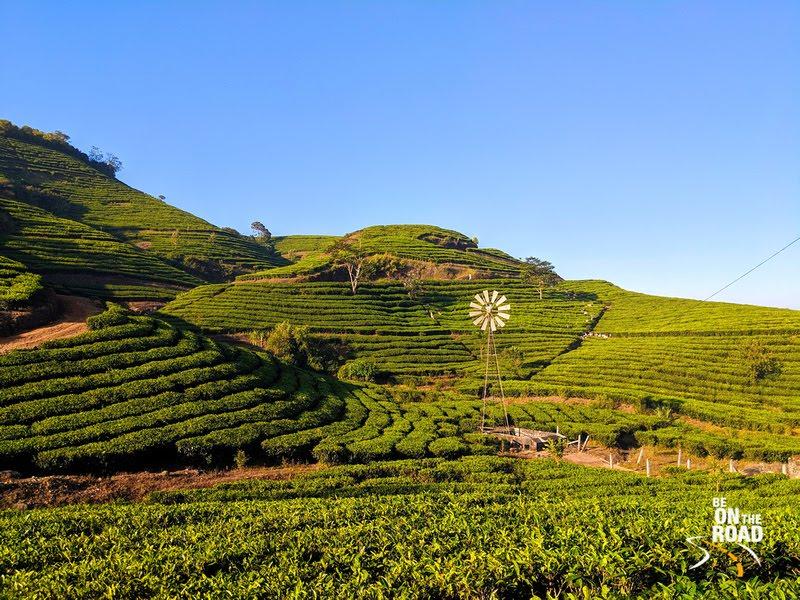 Early morning sun shines on the tea estates of Vagamon, Kerala