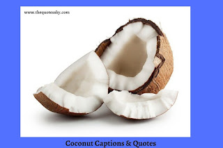 151+ Coconut Captions For Instagram [ 2021 ] Also Quotes