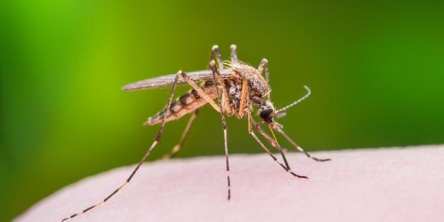 Συστάσεις από την Περιφέρεια Θεσσαλίας για την καταπολέμηση των κουνουπιών - Τρία κρούσματα στη Λάρισα του ιού του Δυτικού Νείλου