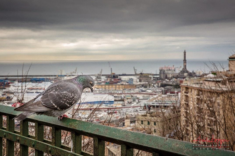 Genova panorama piccione e lanterna