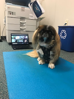 Clyde enjoys time on the mat.
