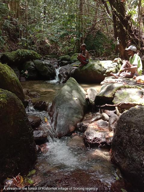 stream in tropical rainforest