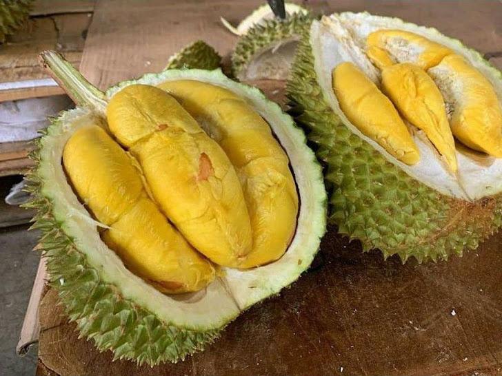 Bibit Durian Musangking Sumatra Barat