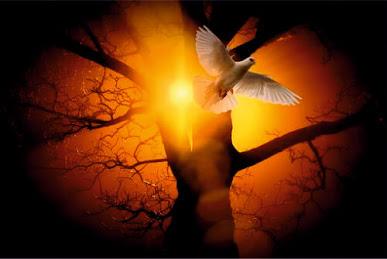 Pomba voando no por do sol