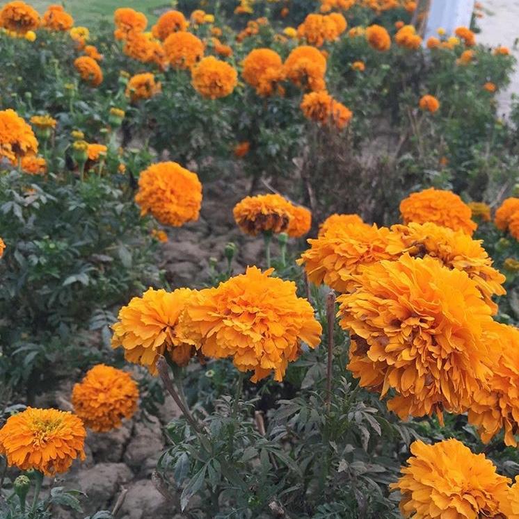 Faridia Park, Sahiwal, Punjab, Pakistan